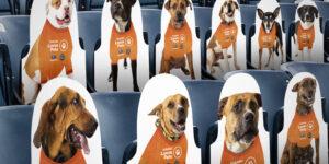 Philadelphia Union promove adoção de cães nos assentos do seu estádio