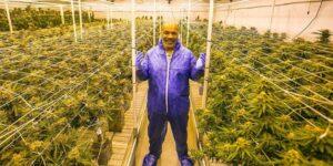 Como a indústria da Cannabis reergueu o patrimônio de Mike Tyson